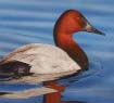 Waterfowl Paddle Sunday, October 15 10:00am-12:30pm Image